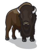 Bull Bison. Illustration of a lonely Bull Bison Royalty Free Stock Image
