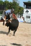 Bull rider 3. Bull bucking off the rider Stock Photography