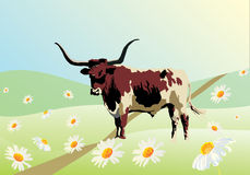 Bull on camomile field. Illustration with bull on camomile field Stock Photos