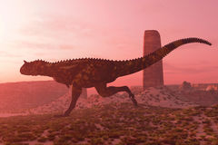 Carnotaurus on the Run. A bull Carnotaurus runs after his prey in the early morning light in a desert terrain Royalty Free Stock Images