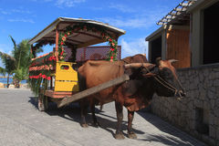 Bull carriage in Seychelles Stock Photos