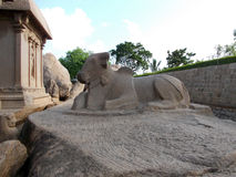 A bull carved out of a rock by hand. Mahabalipuram is a coastal town approximately 65km south of Chennai in South India.  It has many religious relics that are Stock Image