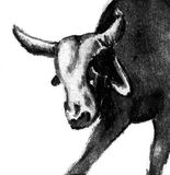 Bull charcoal illustration. Charcoal illustration of the head of a bull Stock Images
