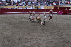A bull charges through a group of young men. An injured bull rips through a group of young men who had tried to corral him during a bullfight in the arena of Stock Photo