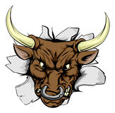 Bull charging through wall. A bull sports mascot or character breaking out of the background or wall Stock Photography