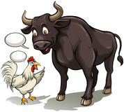 Bull and a cock Stock Photography
