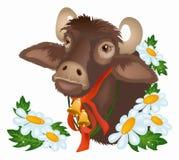 Bull com camomiles Fotos de Stock Royalty Free