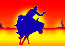 Bull competition Royalty Free Stock Images