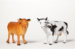 Bull and Cow Stock Image