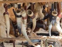 BULL AND COW ANTLERS FOR SALE royalty free stock photos
