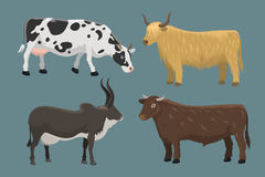 Bull and cow farm animal vector illustration. Royalty Free Stock Photography