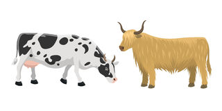 Bull and cow farm animal vector illustration. Royalty Free Stock Images