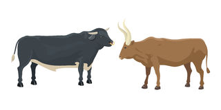 Bull and cow farm animal vector illustration. Stock Images