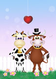 Bull and cow in love Royalty Free Stock Photo