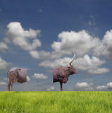 Bull cutlet. A bull separated in two with blank space for text, standing on horizon of a grassy plain against a cloudy summer blue sky stock photography