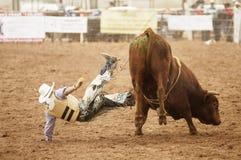 Bull, das 12 reitet Stockfotos
