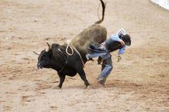 Bull, das 13 reitet Stockbilder