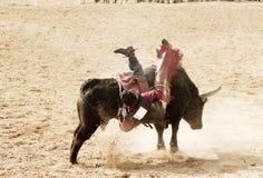 Bull, das 4 reitet Lizenzfreie Stockfotos