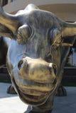 Bull de risa Fotografía de archivo libre de regalías