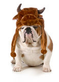 Bull dog Stock Photography