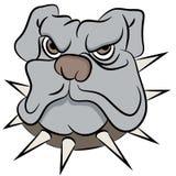 Bull Dog Face Stock Photo
