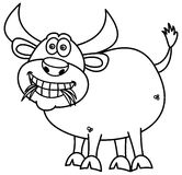 Bull eating grass for coloring Stock Photography