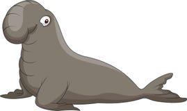 Bull Elephant Seal Stock Photography