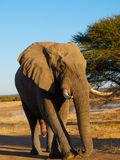 Bull elephant with waterhole in background Stock Photo