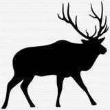 Bull Elk Illustration Royalty Free Stock Image
