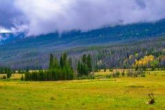 Bull Elk in Rocky Mountain National Park stock photo