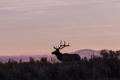 Bull Elk Silhouette Stock Photos