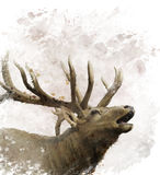 Bull Elk Watercolor Royalty Free Stock Images