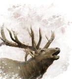 Bull Elk Watercolor. Digital Painting Of Bull Elk stock illustration