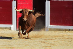 Bull em Spain fotografia de stock