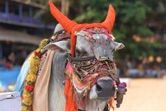Bull en accesorios indios tradicionales Fotografía de archivo