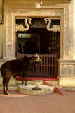 Bull en la entrada del templo Imagen de archivo