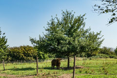 Bull en la granja Imagenes de archivo