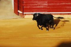 Bull en plaza de toros en España. Fotos de archivo