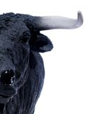 Bull espanhola 02 Fotografia de Stock Royalty Free