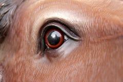 Bull eye Stock Photos