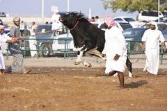Bull fâché Images stock
