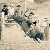 Bull-Fahrt Lizenzfreies Stockfoto