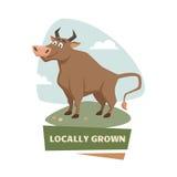 Bull on field Royalty Free Stock Photos