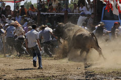 Bull fight. Prepared by the stadium district Sultanhisar 07/06/2009 configured in wrestling, the sunny weather because people were followed up to 4 thousand stock images