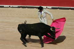 Bull Fight France. A young picador learning to bull fight in southern France royalty free stock photography