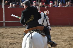 Bull fighting horse Royalty Free Stock Images