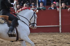 Bull fighting horse Royalty Free Stock Image