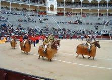 Bull fighting parade Stock Photo