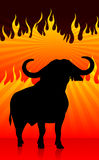 Bull with fire background Stock Photo