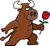 Bull Flower Royalty Free Stock Images